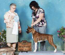 Best Puppy in Specialty under Judge Shirley Bell.