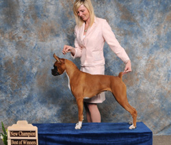 BOW and New Champion under judge Everett Mincey.