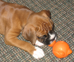 Presley playing with -- OKAY -- chewing on a toy!!!