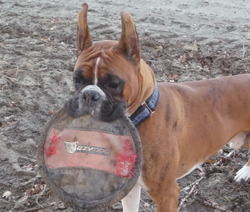 Riddyck with his very well used frisbee.