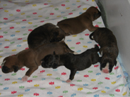 The five girls from this litter.