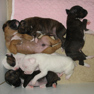 Group of sleeping puppies.